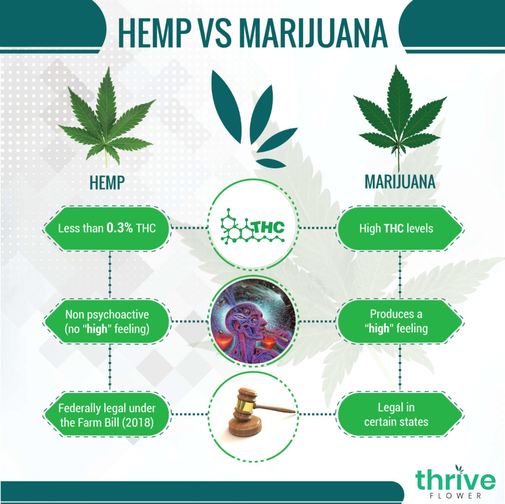 what is the difference between hemp and marijuana