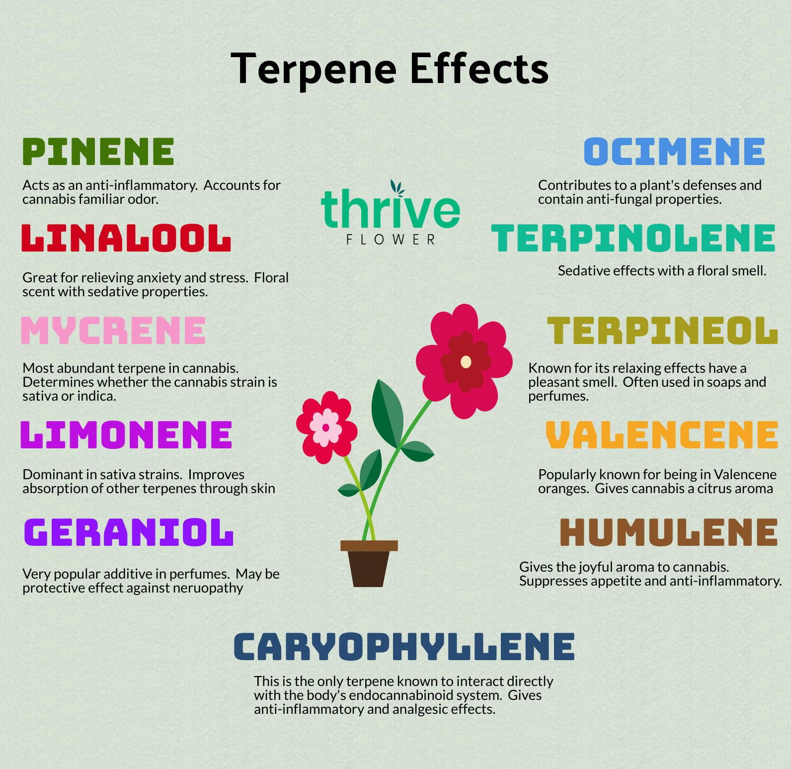 Effects of Terpenes