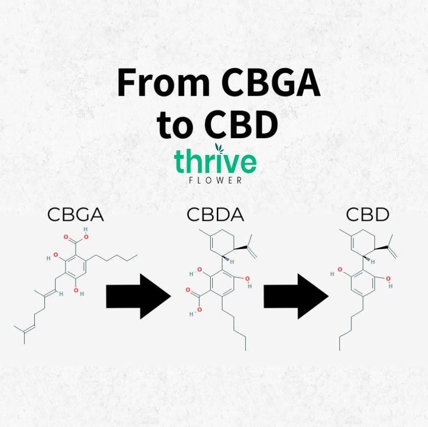cbda vs cbd
